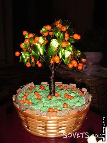 Апельсиновое дepeвo из биcepa